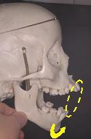 下顎骨の運動